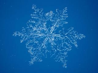 обои Снежинка на синем фоне фото