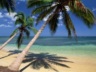 обои Кокосовые пальмы склонились к океану фото