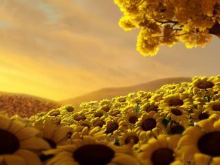 обои Множество подсолнухов под желтым деревом фото