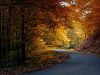 обои Извилистая дорога под осенней листвой фото
