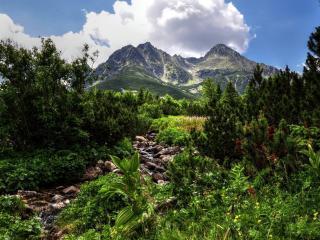 обои Летний ручеек в горах,   под облаком фото