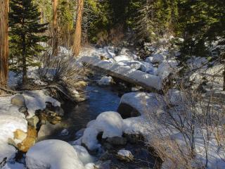 обои Ручей зимой в лесу,   солнечным днем фото