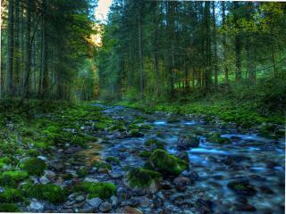 обои для рабочего стола: Весна в лесу,   закат у ручья