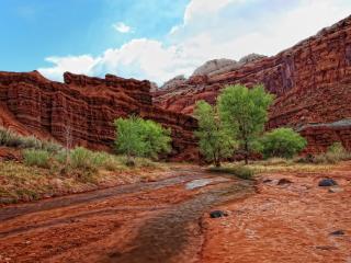 обои Ручей в каньоне у красных скал,   в летний день фото