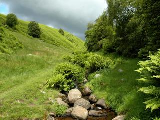 обои Ручей среди пышной зелени лета фото