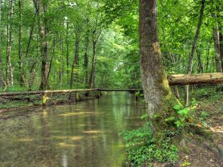 обои Ручей в весеннем проснувшемся лесу фото