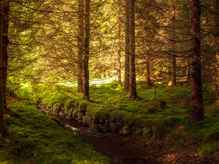 обои Весенний ручей в солнечной гуще леса фото