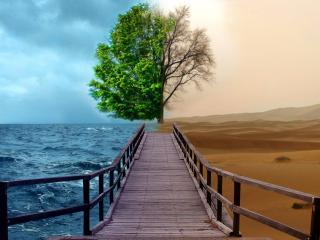 обои Мостик разделяющий бытие фото