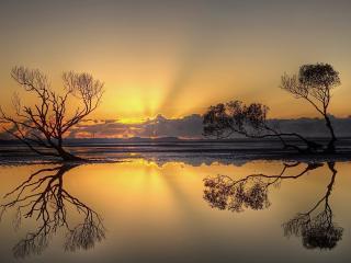 обои Сухие деревья на вечерней глади озера фото