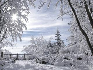 обои Зимний пейзаж в солнечный день фото
