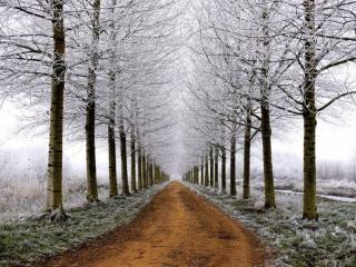 обои Дорога в ноябрь фото