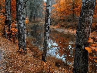 обои Маленький пруд в осеннем лесу фото