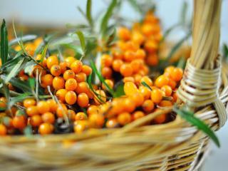 обои Осенние витаминки - облепиха фото