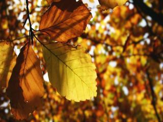 обои Осенние листья в солнечный день фото