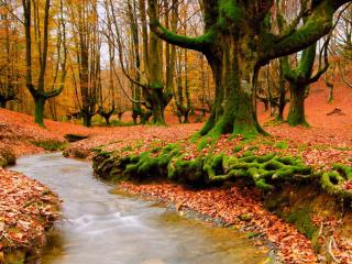 обои для рабочего стола: Осень в сказочном лесу у ручья