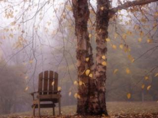 обои У дерева, природы осенняя печаль фото