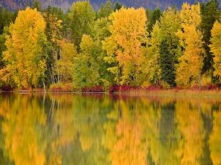 обои Салатовая осень на озере фото
