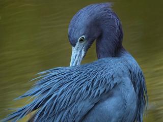 обои Синяя птица фото