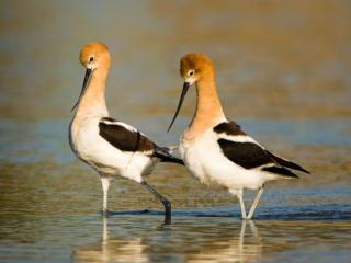 обои Две птички фото