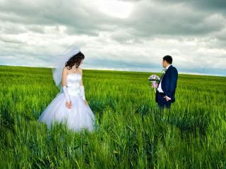обои Новобрачные в зелёном поле фото