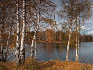 обои Осенний блюз у реки фото