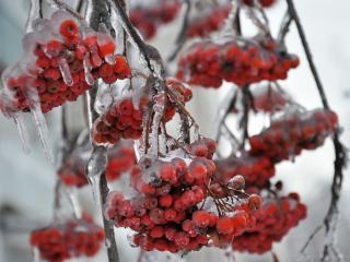 обои Осенний лёд фото