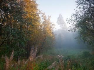 обои Осенний сон в лесу фото