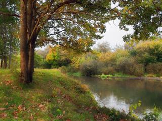обои Осень на реке Болве фото