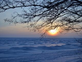 обои Встреча зимнего заката под деревом фото