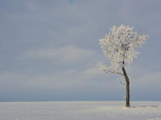 обои Заснеженное дерево посреди зимних просторов фото