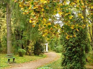обои Осень,   парк,   скамейка фото