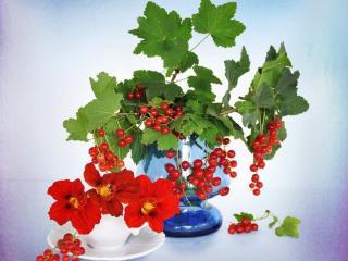 обои Натюрморт - Смородинка и цветы фото