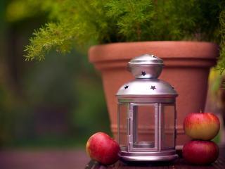 обои Натюрморт - Яблоки фонарь и можжевельник фото