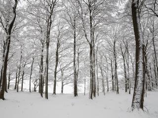 обои Зима в осиннике фото