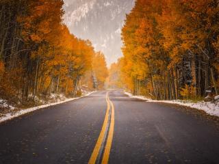 обои Дорога поздней осенью фото