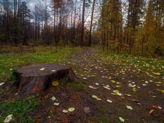 обои Осенняя прогулка ветерка фото