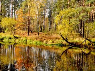 обои Осень на маленькой речке фото
