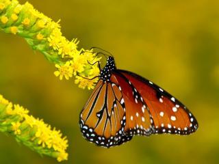 обои Бабочка на листочке фото