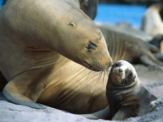 обои Мать ухаживает за ребенком фото