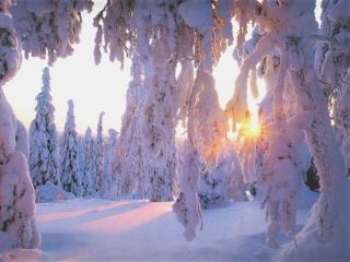 обои Зимние лучи в лесу фото