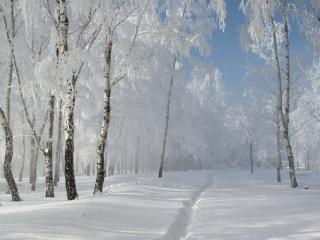 обои Зимняя тропинка в лесу фото