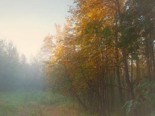 обои Туманные фантазии осеннего леса фото
