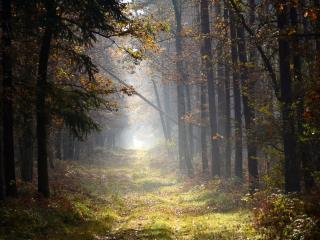 обои Туманный лес в начале ноября фото