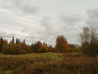обои У лесной природы нет плохой погоды фото