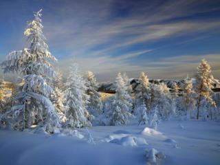 обои Красота Заполярья лесного фото