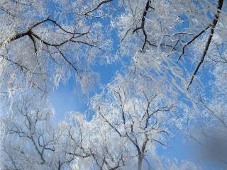 обои Кружева зимы на деревьях леса фото
