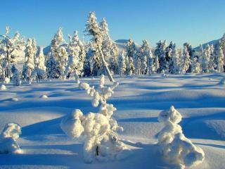 обои Снег и тени в лесу фото