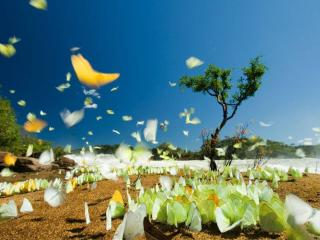 обои Бабочки Коста-Рики фото