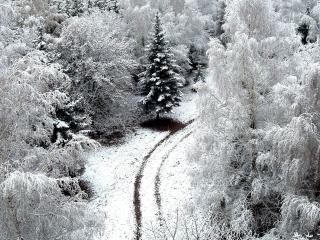 обои Снежная дорога в заснеженном лесу фото