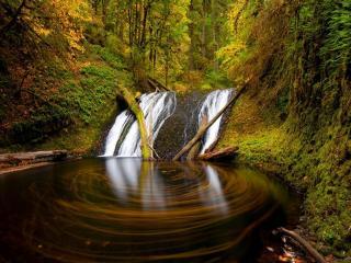 обои Водоворот листьев в лесу фото